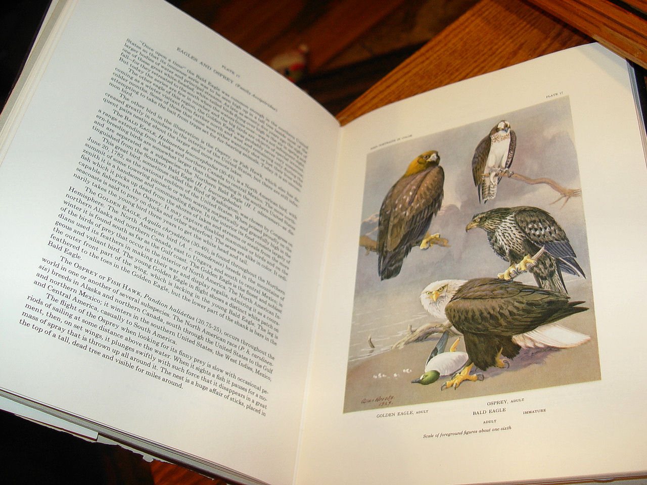 Vintage 1968 Second                                         Printing Bird Portraits in Color                                         by Thomas Sadler Roberts