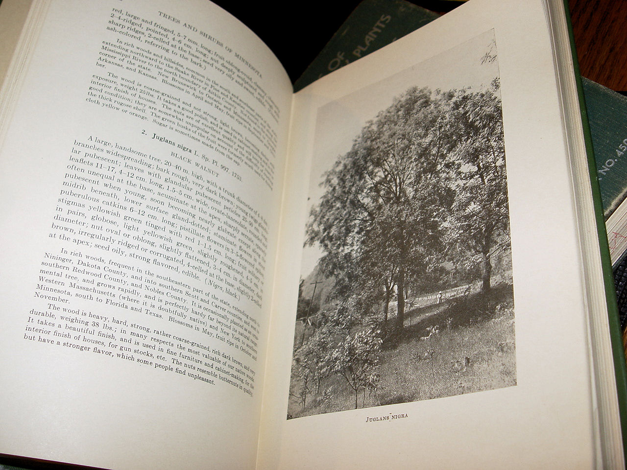 Trees and shrubs of                                         Minnesota, by Carl Otto                                         Rosendahl and Frederic K.                                         Butters ~ 1928